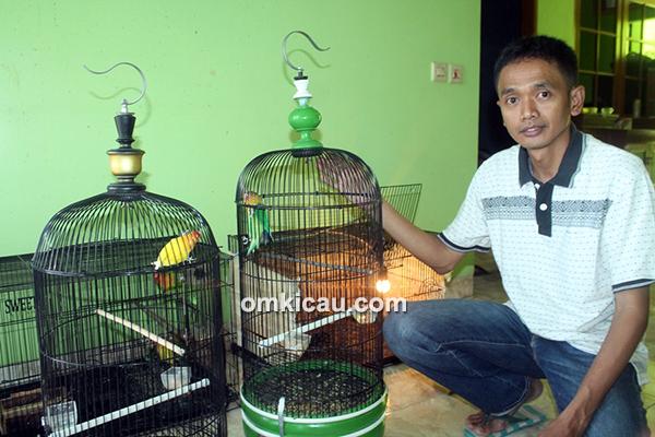 Mencetak lovebird baby berprestasi ala Om Ojiey