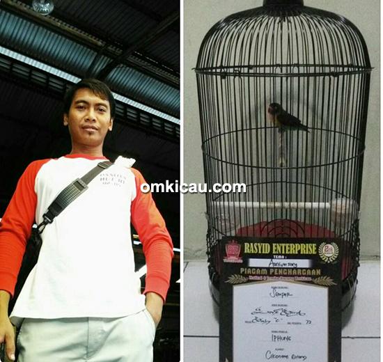 Lovebird Semper