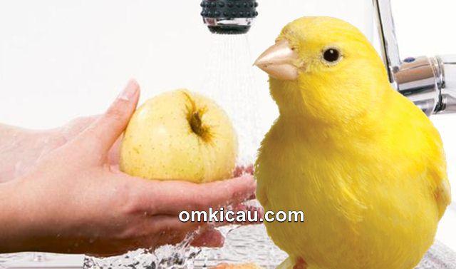 Tips mencuci buah dan sayuran sebelum diberikan pada burung