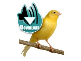 Download Suara Burung Kenari MP3