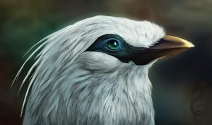 gambar lukisan burung jalak bali