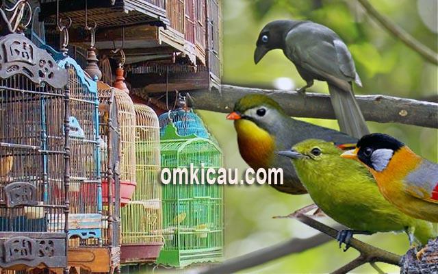 Harga burung di Jabodetabek