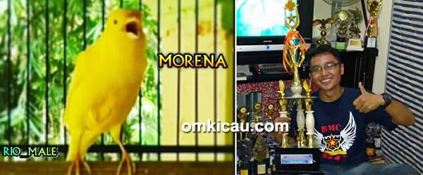 Kenari Morena