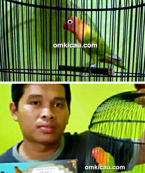 Lovebird Janur Kuning