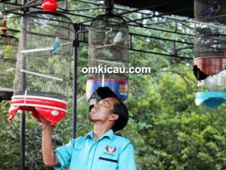 lomba burung berkicau monaliza cup