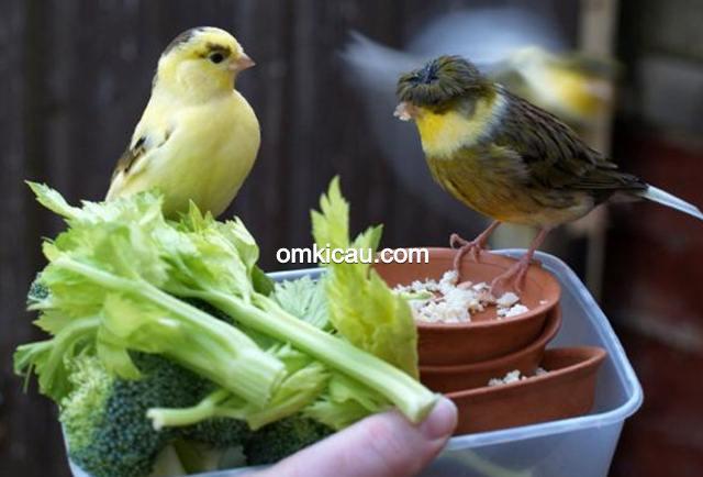 sayuran untuk burung