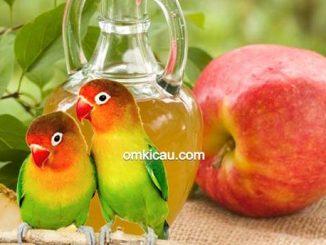 Membuat sari apel untuk burung lovebird