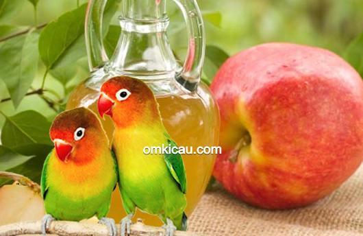 minuman dari buah apel untuk burung