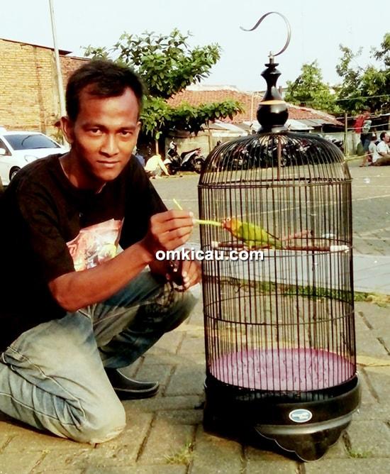 lovebird SW