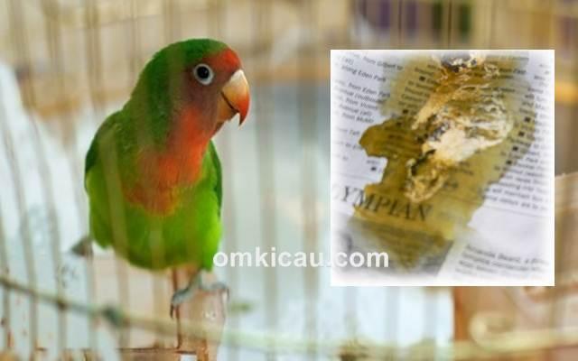 Cara mengatasi burung diare