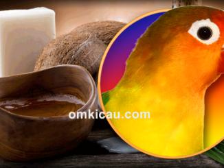 Manfaat minyak kelapa untuk burung