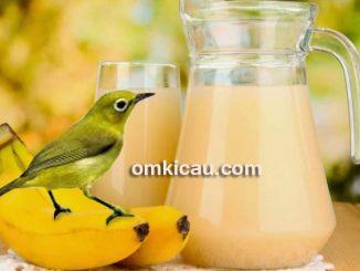 Sari buah pisang untuk burung pleci