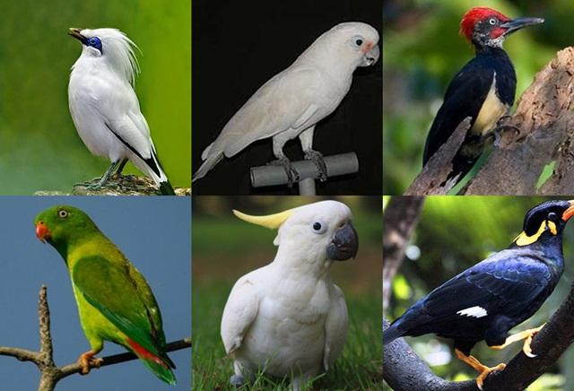 status perdagangan burung