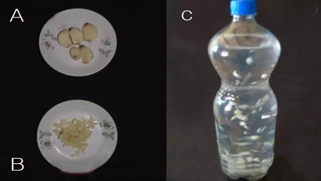 cara mengolah bawang putih