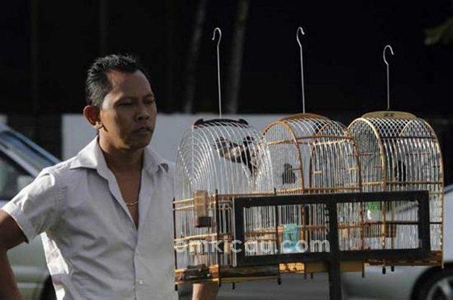 Tiga jenis burung popular di Suriname dan suaranya untuk masteran