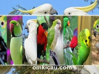 10 jenis parrot yang dikenal pintar meniru ucapan manusia