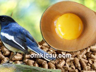 Cara menambah protein kuning telur dalam voer kemasan/kiloan
