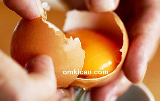 tepung kuning telur untuk burung