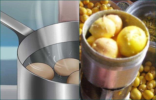 tepung kuning telur untuk burung kicauan