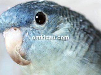 Paruh burung yang terlalu panjang bisa menghambat aktivitasnya