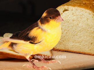 Roti tawar untuk pakan kenari