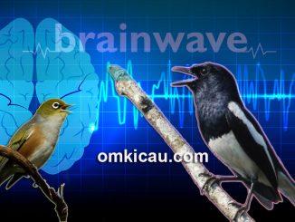 Enam audio terapi brainwave terbaru untuk burung kicauan