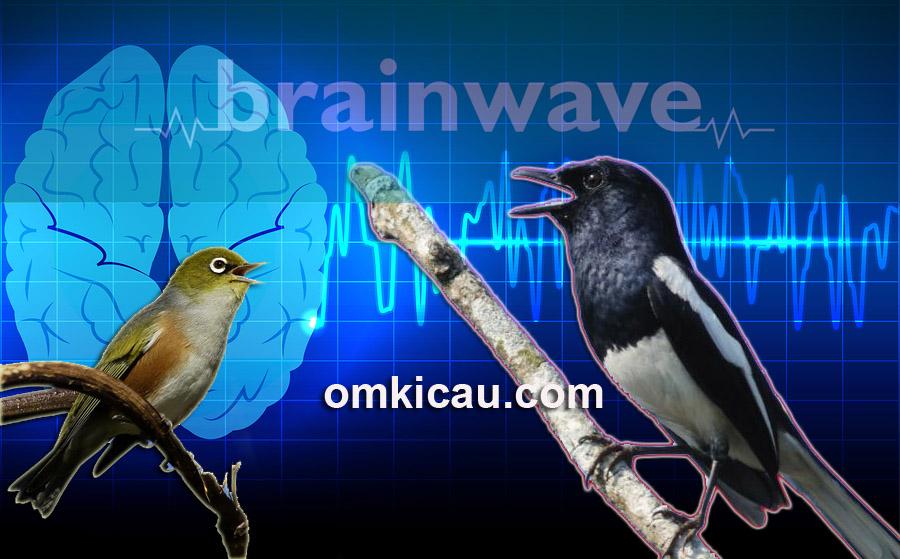 audio terapi brainwave