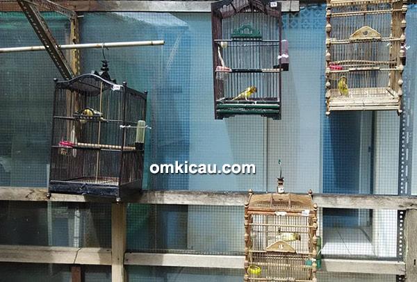 CS Bird Farm