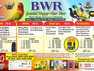 BWR Special Happy New Year