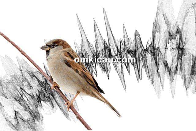 stres berat pada burung