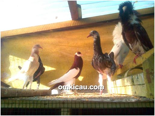 Ghio Bird Farm