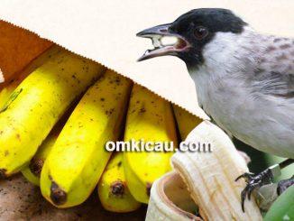 cara mematangkan buah pisang untuk pakan burung