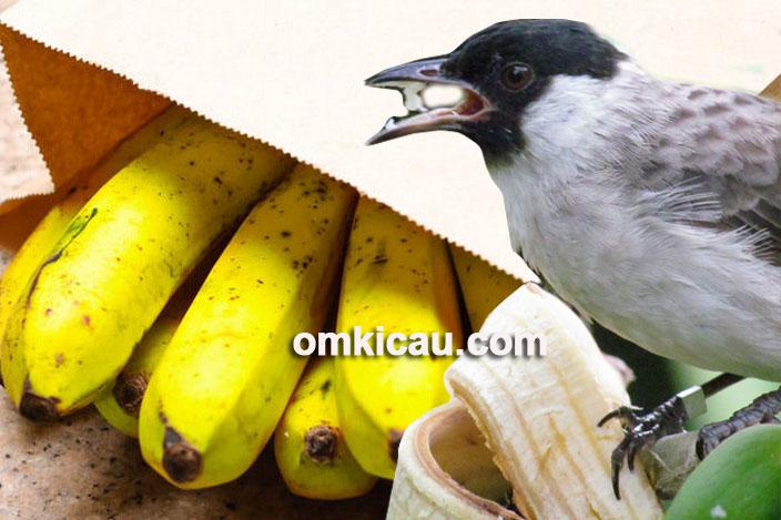 tips mematangkan buah pisang