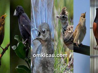Enam jenis burung terkenal di dunia