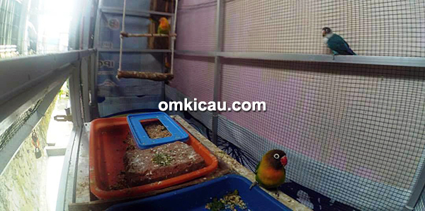 MRF Bird Farm Bengkulu