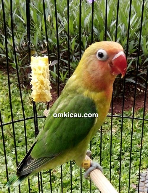 TJM Casol Bird Farm
