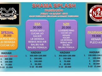 Latber Shama Splash
