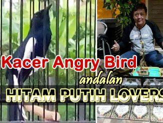kacer Angry Bird