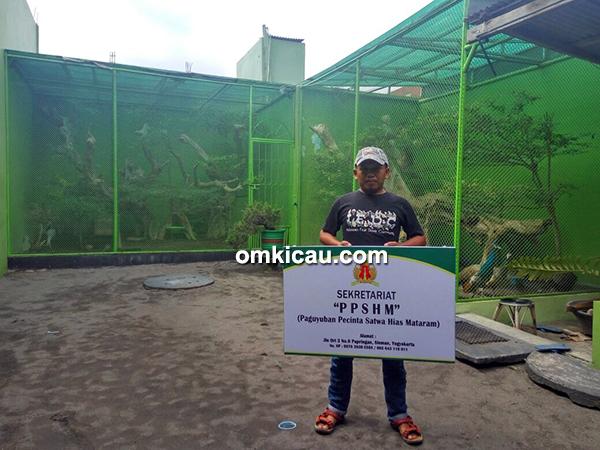 breeding merpati hias Pawiro BF Jogja