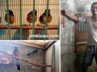 Dodie Shama Bird Farm
