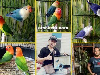 breeding lovebird warna Mak'e Bird Farm