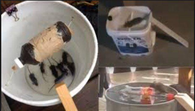 Perangkap tikus dari ember bekas