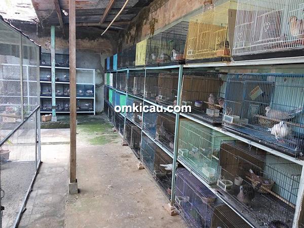 Pawiro Bird Farm Jogja