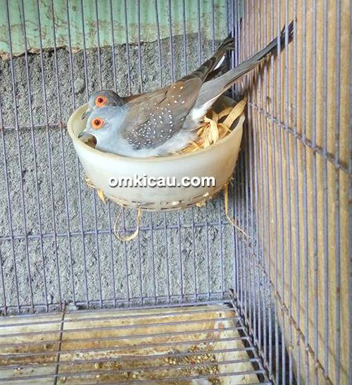 Pawiro Bird Farm