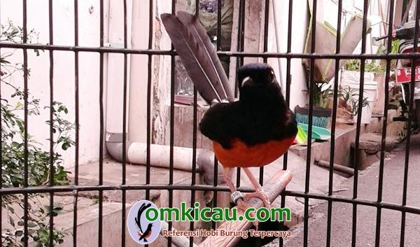 MR Bird Farm