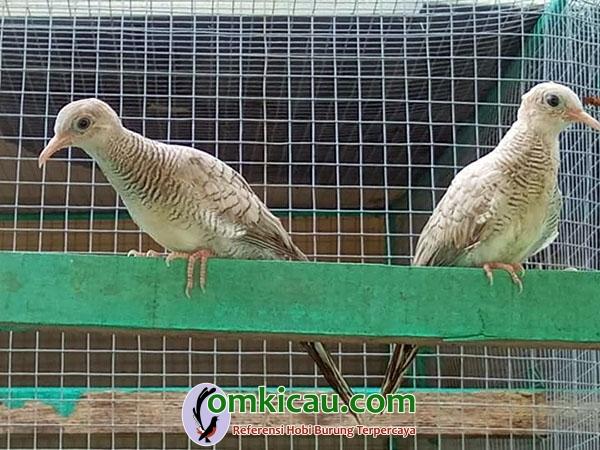 Danadyaksa Bird Farm