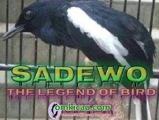 Kacer Sadewo