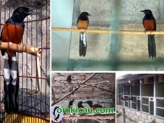Plat L Bird Farm