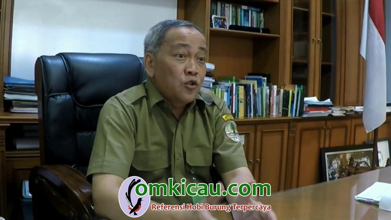 Direktur Jenderal Konservasi dan Sumber Daya Alam dan Ekosistem (KSDAE) Ir. Wiratno, M.Sc