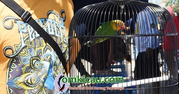 lovebird Sri